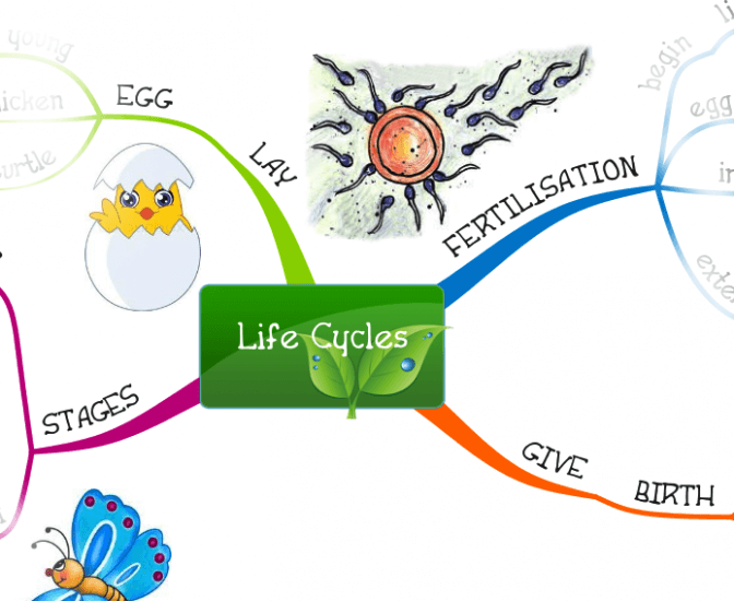 my life map topic Essay map - readwritethink.